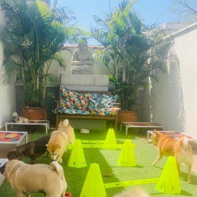 Daycare - Creche - Hotel